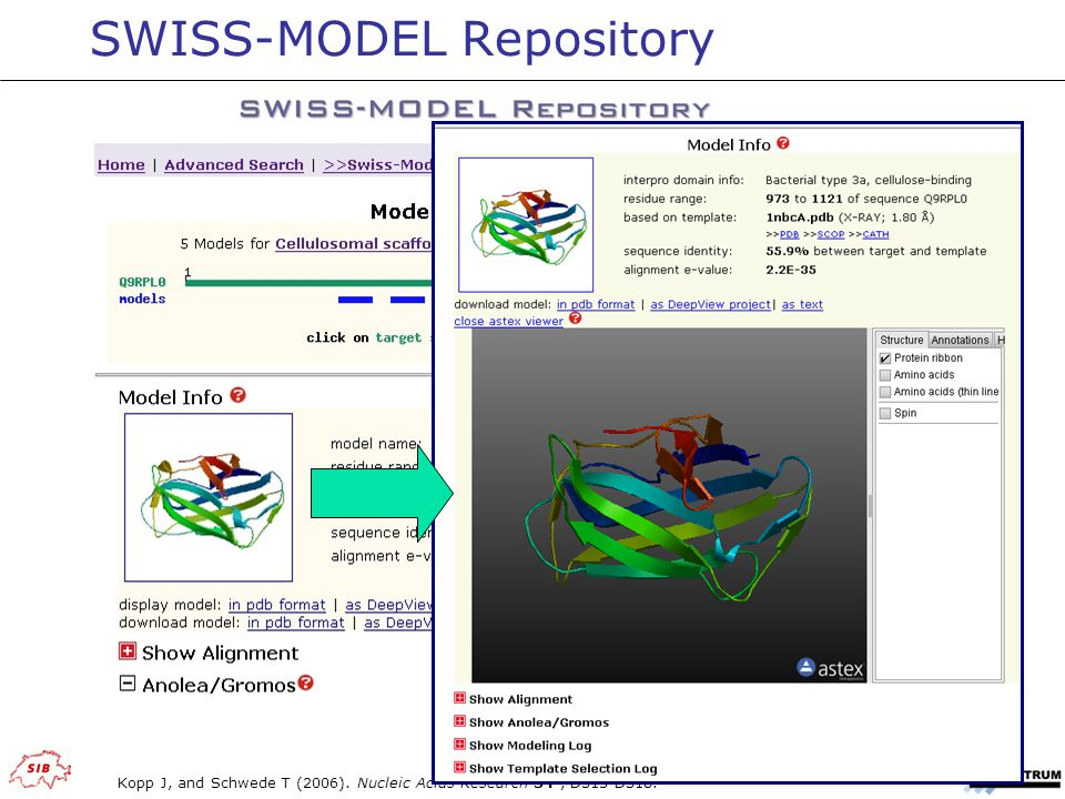SWISS-MODEL Repository Kopp J, and Schwede T (2006). Nucleic Acids Research 34, D315-D318.