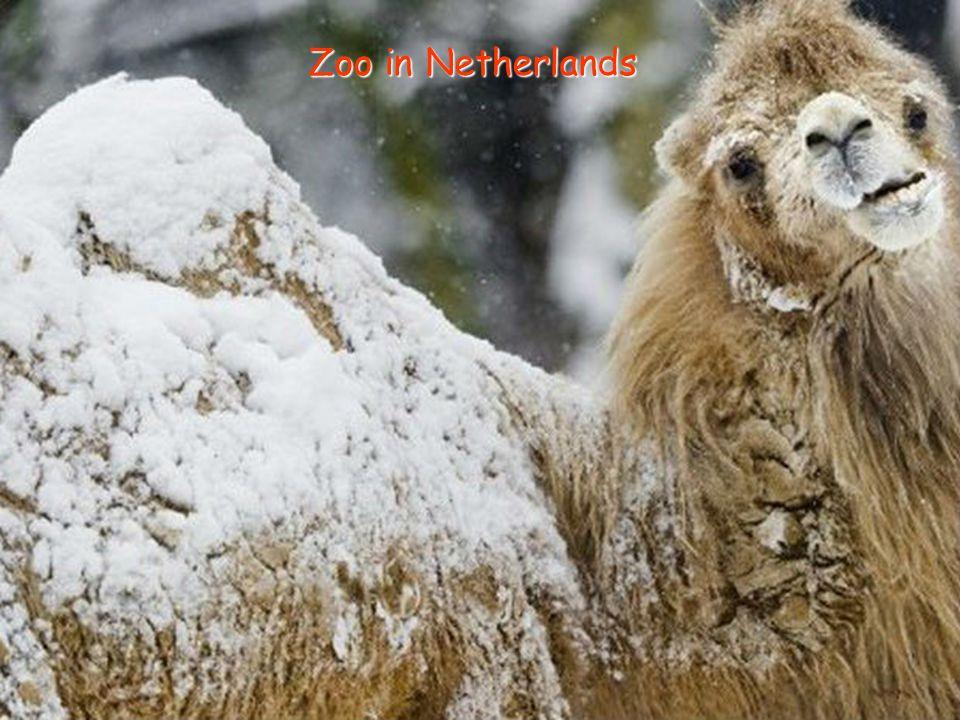 Zoo in Netherlands