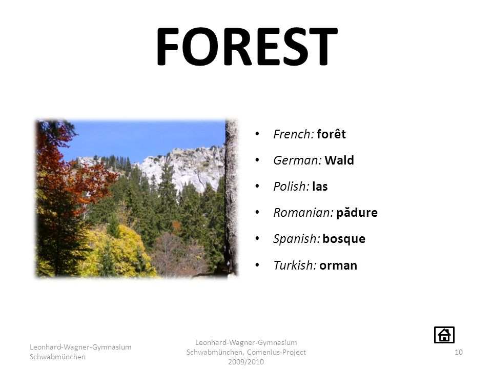 FOREST French: forêt German: Wald Polish: las Romanian: p ă dure Spanish: bosque Turkish: orman Leonhard-Wagner-Gymnasium Schwabmünchen Leonhard-Wagner-Gymnasium Schwabmünchen, Comenius-Project 2009/2010 10