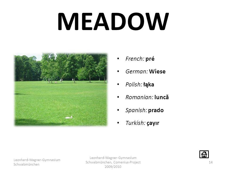 MEADOW French: pré German: Wiese Polish: łąka Romanian: lunc ă Spanish: prado Turkish: çayır Leonhard-Wagner-Gymnasium Schwabmünchen Leonhard-Wagner-G