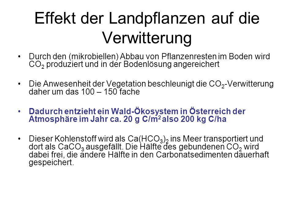 Effekt der Landpflanzen auf die Verwitterung Durch den (mikrobiellen) Abbau von Pflanzenresten im Boden wird CO 2 produziert und in der Bodenlösung an
