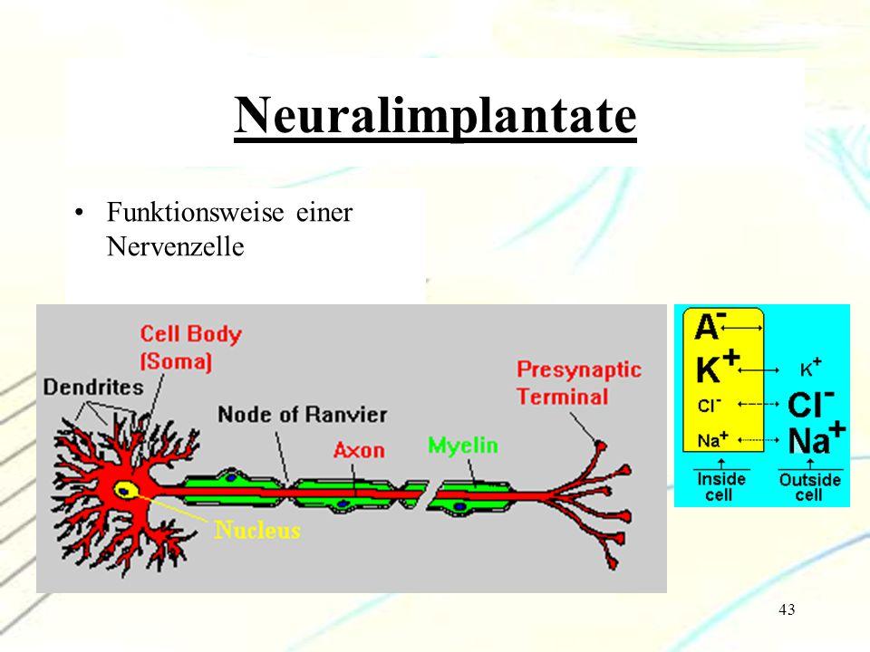 43 Neuralimplantate Funktionsweise einer Nervenzelle