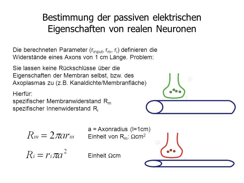 Bestimmung der passiven elektrischen Eigenschaften von realen Neuronen Die berechneten Parameter (r input, r m, r i ) definieren die Widerstände eines