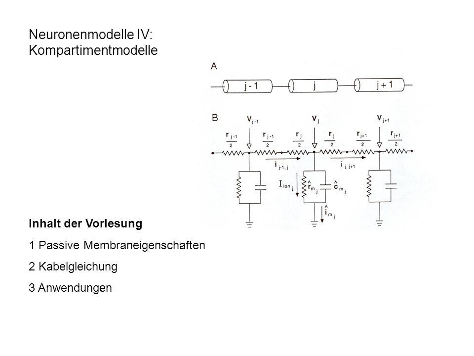 Neuronen als Kabel Injektion von Strom in einen Zylinder; V m ändert sich als Funktion der Zeit und des Abstandes relativ zum Injektionsort: i i : Strom durch das Kabel (Axon) da etwas Strom auch über die Membran fließt (i m ), bleibt i i nicht konstant: 1.) 2.) 3.) aus 1.) und 2.)