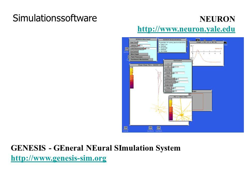 Simulationssoftware NEURON http://www.neuron.yale.eduhttp://www.neuron.yale.edu GENESIS - GEneral NEural SImulation System http://www.genesis-sim.org