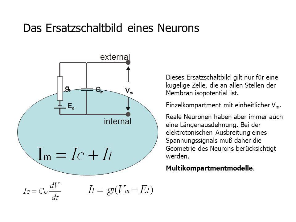 Das Ersatzschaltbild eines Neurons Dieses Ersatzschaltbild gilt nur für eine kugelige Zelle, die an allen Stellen der Membran isopotential ist. Einzel