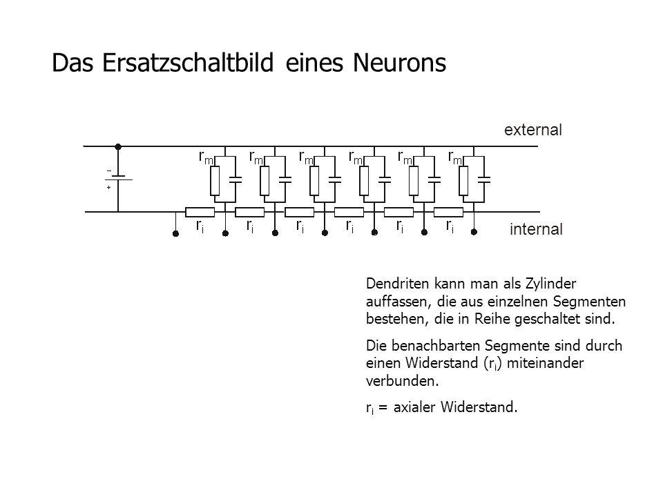 Das Ersatzschaltbild eines Neurons Dendriten kann man als Zylinder auffassen, die aus einzelnen Segmenten bestehen, die in Reihe geschaltet sind. Die