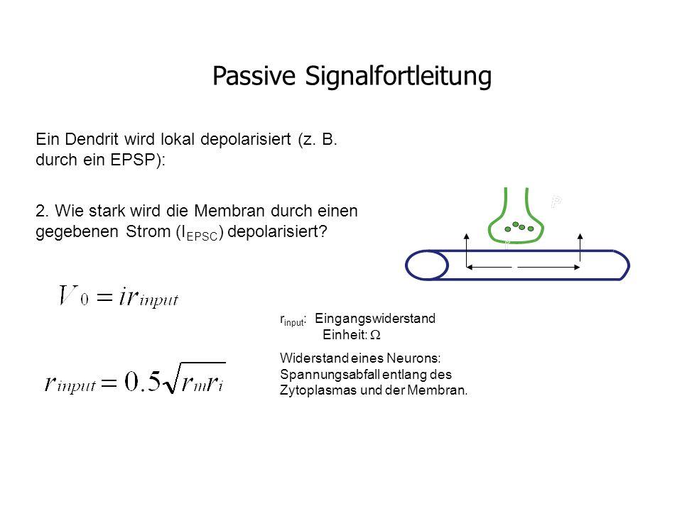 Ein Dendrit wird lokal depolarisiert (z. B. durch ein EPSP): 2. Wie stark wird die Membran durch einen gegebenen Strom (I EPSC ) depolarisiert? r inpu