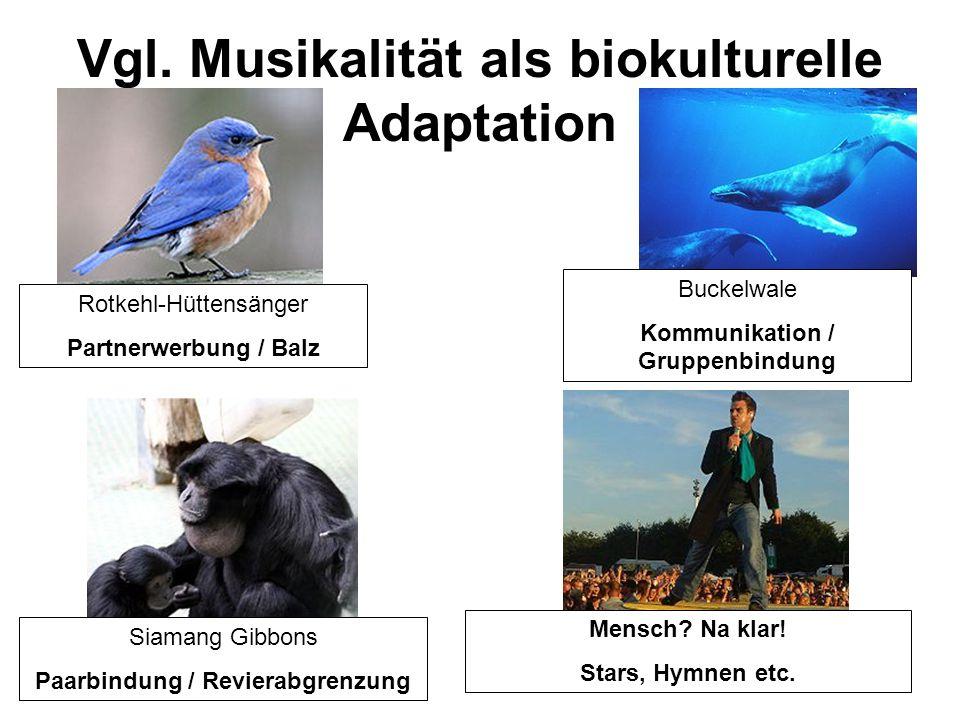 Vgl. Musikalität als biokulturelle Adaptation Rotkehl-Hüttensänger Partnerwerbung / Balz Buckelwale Kommunikation / Gruppenbindung Siamang Gibbons Paa