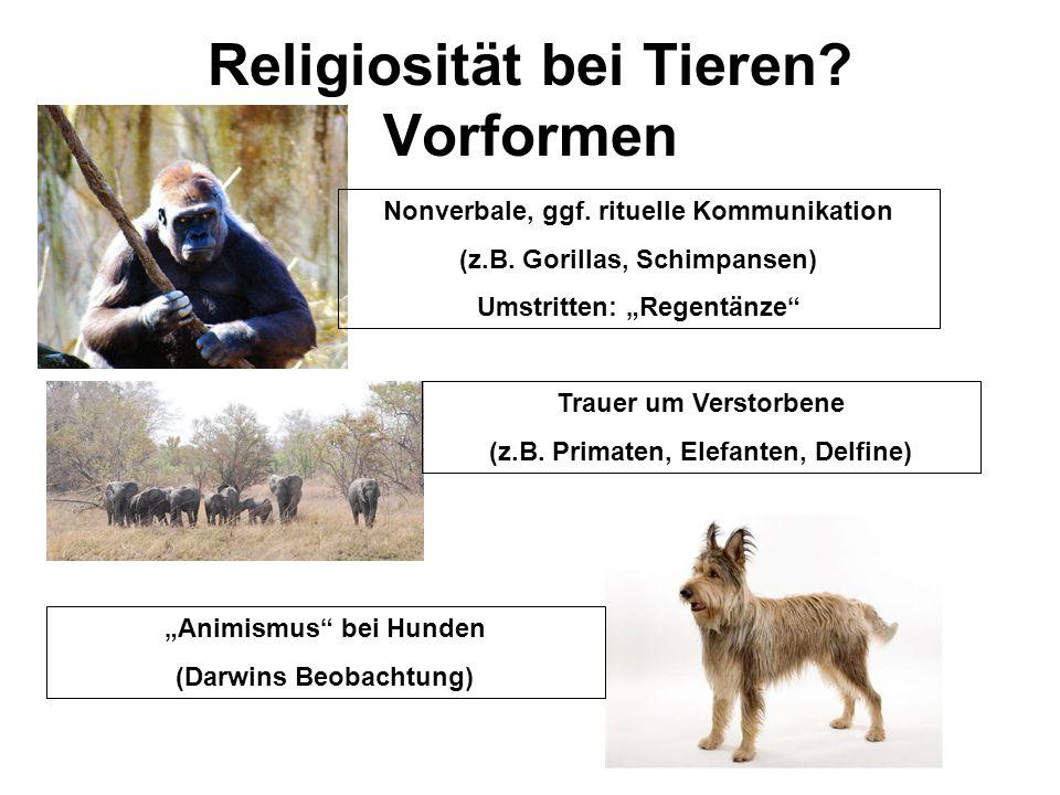 """Religiosität bei Tieren? Vorformen Nonverbale, ggf. rituelle Kommunikation (z.B. Gorillas, Schimpansen) Umstritten: """"Regentänze"""" Trauer um Verstorbene"""