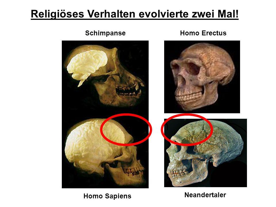Religiöses Verhalten evolvierte zwei Mal! Schimpanse Homo Sapiens Neandertaler Homo Erectus