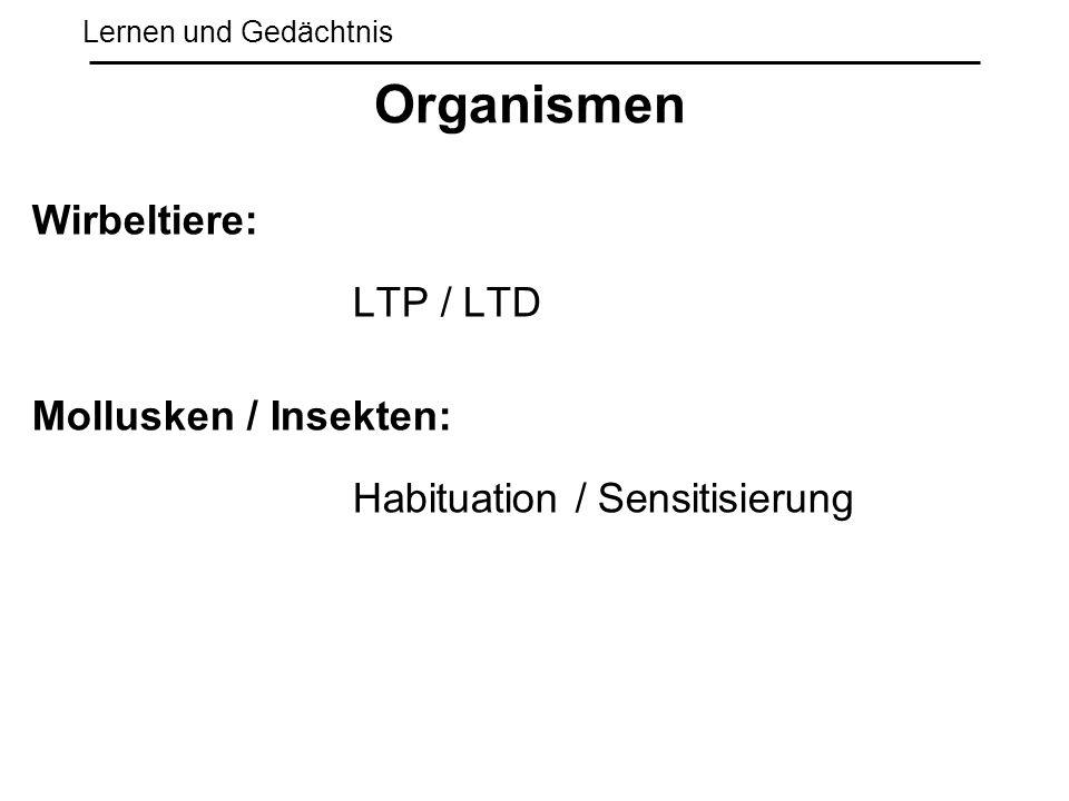 Lernen und Gedächtnis Wirbeltiere: LTP / LTD Mollusken / Insekten: Habituation / Sensitisierung Organismen