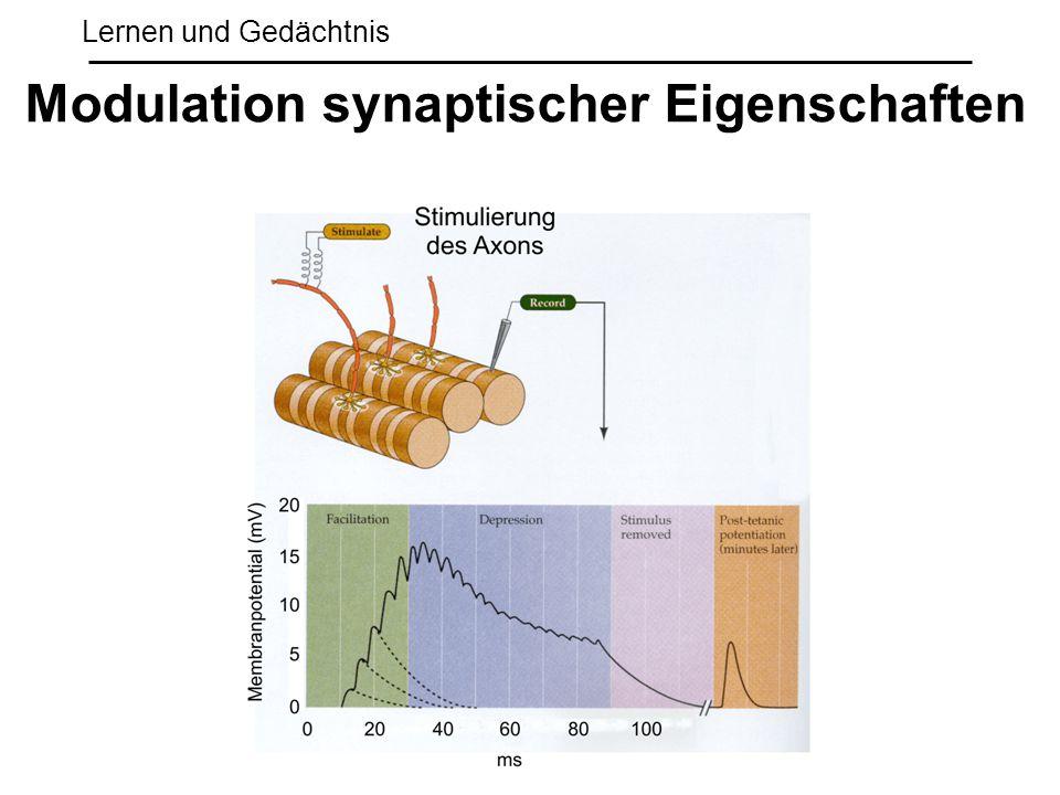 Lernen und Gedächtnis Modulation synaptischer Eigenschaften