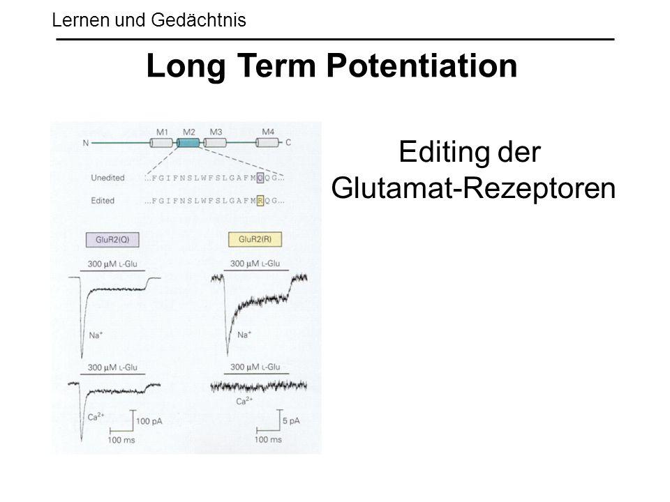 Lernen und Gedächtnis Long Term Potentiation Editing der Glutamat-Rezeptoren
