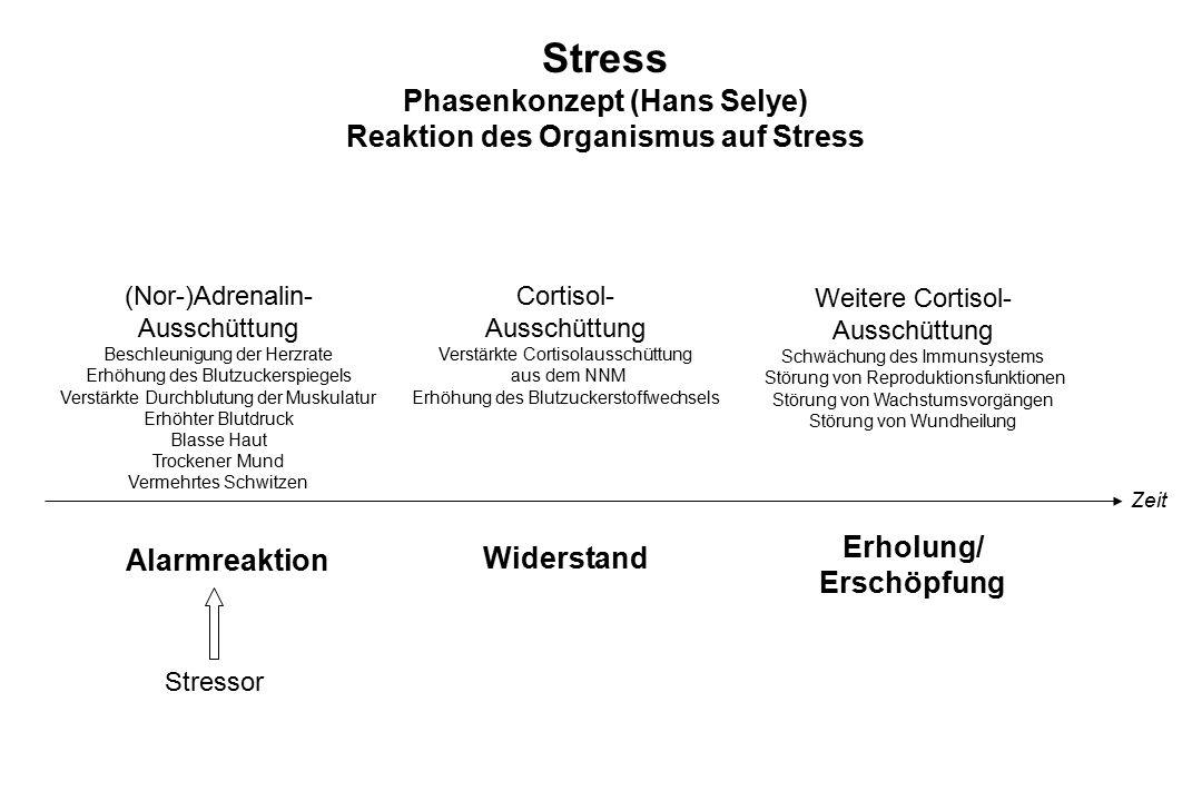 Stress Phasenkonzept (Hans Selye) Reaktion des Organismus auf Stress (Nor-)Adrenalin- Ausschüttung Beschleunigung der Herzrate Erhöhung des Blutzucker