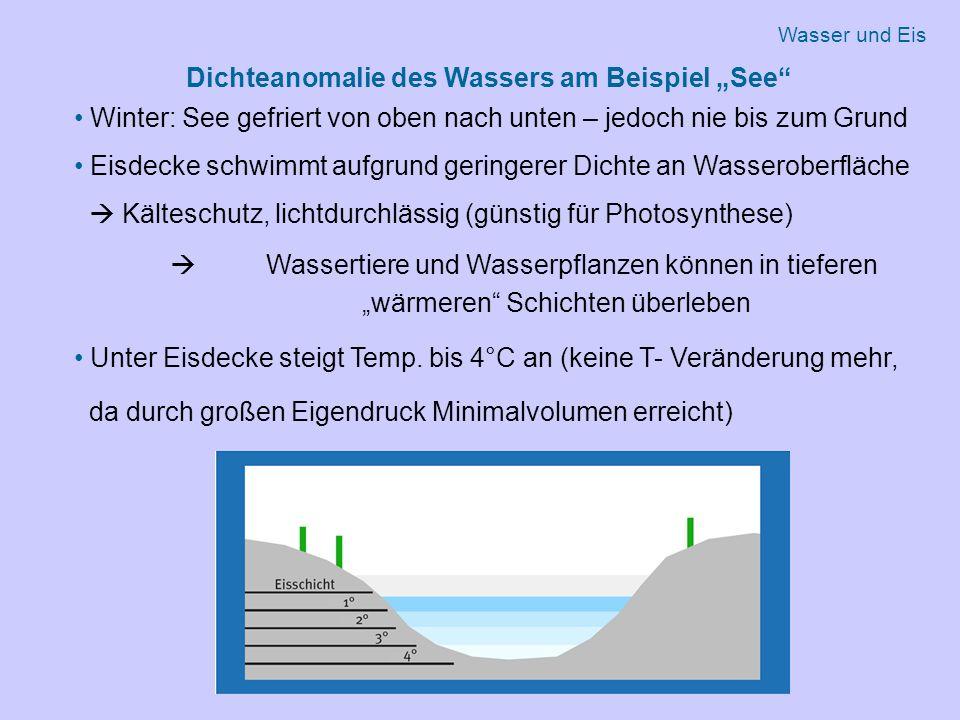 """Dichteanomalie des Wassers am Beispiel """"See Winter: See gefriert von oben nach unten – jedoch nie bis zum Grund Eisdecke schwimmt aufgrund geringerer Dichte an Wasseroberfläche  Kälteschutz, lichtdurchlässig (günstig für Photosynthese)  Wassertiere und Wasserpflanzen können in tieferen """"wärmeren Schichten überleben Unter Eisdecke steigt Temp."""