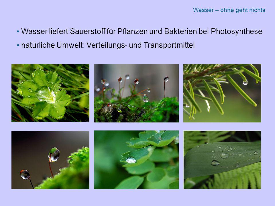 Wasser liefert Sauerstoff für Pflanzen und Bakterien bei Photosynthese natürliche Umwelt: Verteilungs- und Transportmittel Wasser – ohne geht nichts
