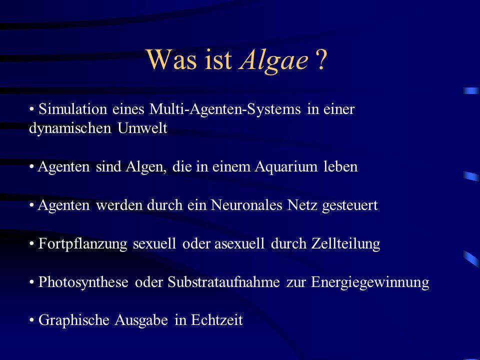 Simulation eines Multi-Agenten-Systems in einer dynamischen Umwelt Agenten sind Algen, die in einem Aquarium leben Agenten werden durch ein Neuronales Netz gesteuert Fortpflanzung sexuell oder asexuell durch Zellteilung Photosynthese oder Substrataufnahme zur Energiegewinnung Graphische Ausgabe in Echtzeit Was ist Algae
