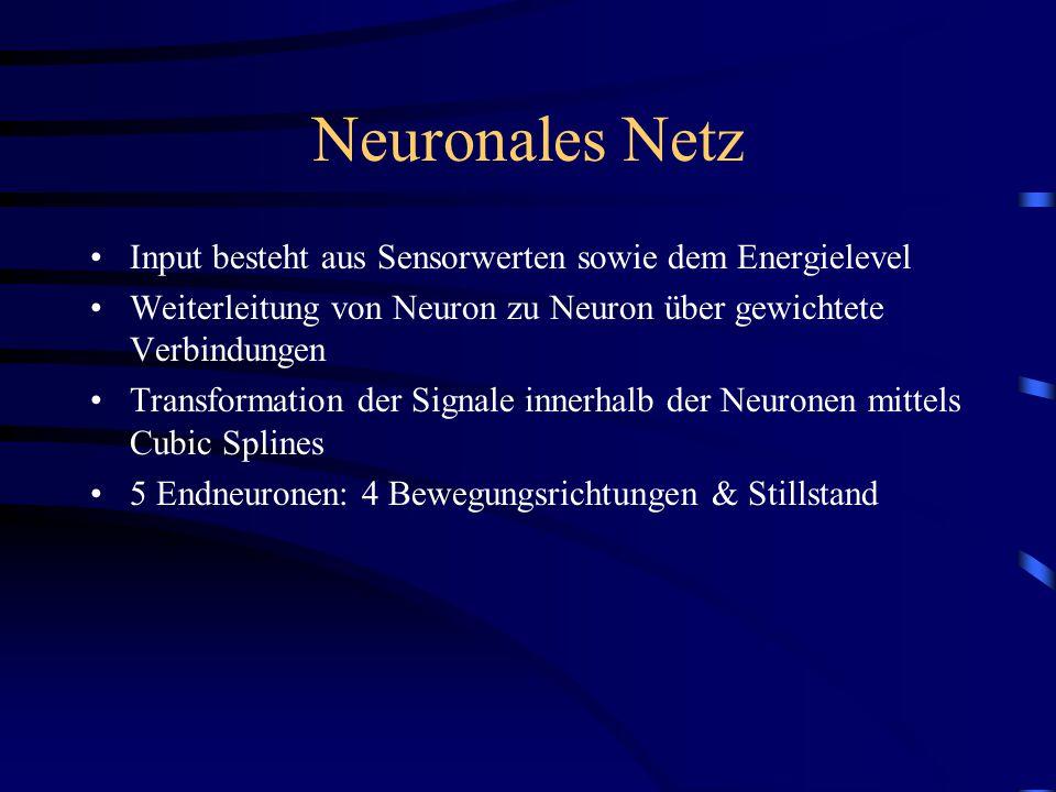 Neuronales Netz Input besteht aus Sensorwerten sowie dem Energielevel Weiterleitung von Neuron zu Neuron über gewichtete Verbindungen Transformation der Signale innerhalb der Neuronen mittels Cubic Splines 5 Endneuronen: 4 Bewegungsrichtungen & Stillstand