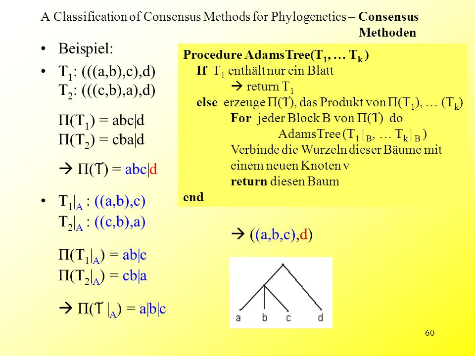 60 A Classification of Consensus Methods for Phylogenetics – Consensus Methoden Beispiel: T 1 : (((a,b),c),d) T 2 : (((c,b),a),d) П(T 1 ) = abc|d П(T 2 ) = cba|d  П( T ) = abc|d Procedure AdamsTree(T 1, … T k ) If T 1 enthält nur ein Blatt  return T 1 else erzeuge П( T ), das Produkt von П(T 1 ), … (T k ) For jeder Block B von П( T ) do AdamsTree (T 1 | B, … T k | B ) Verbinde die Wurzeln dieser Bäume mit einem neuen Knoten v return diesen Baum end  ((a,b,c),d) T 1 | A : ((a,b),c) T 2 | A : ((c,b),a) П(T 1 | A ) = ab|c П(T 2 | A ) = cb|a  П( T | A ) = a|b|c