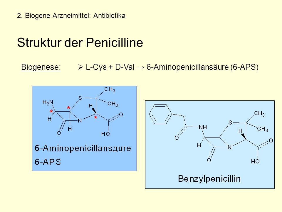 2. Biogene Arzneimittel: Antibiotika Struktur der Penicilline Biogenese:  L-Cys + D-Val → 6-Aminopenicillansäure (6-APS)