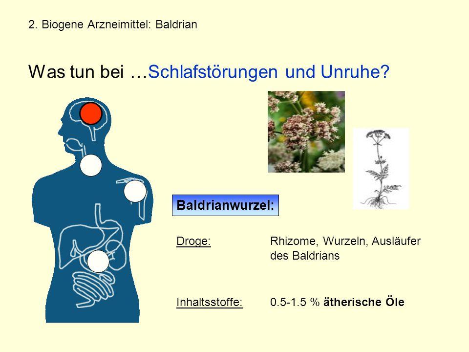 2.Biogene Arzneimittel: Baldrian Was tun bei …Schlafstörungen und Unruhe.