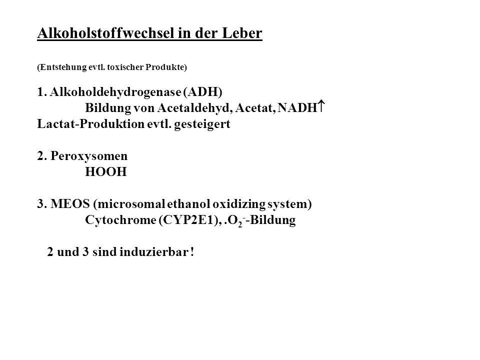 Alkoholstoffwechsel in der Leber (Entstehung evtl. toxischer Produkte) 1. Alkoholdehydrogenase (ADH) Bildung von Acetaldehyd, Acetat, NADH  Lactat-Pr