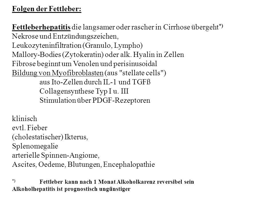 Folgen der Fettleber: Fettleberhepatitis die langsamer oder rascher in Cirrhose übergeht *) Nekrose und Entzündungszeichen, Leukozyteninfiltration (Gr