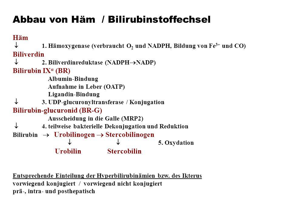 Abbau von Häm / Bilirubinstoffechsel Häm  1. Hämoxygenase (verbraucht O 2 und NADPH, Bildung von Fe 3+ und CO) Biliverdin  2. Biliverdinreduktase (N