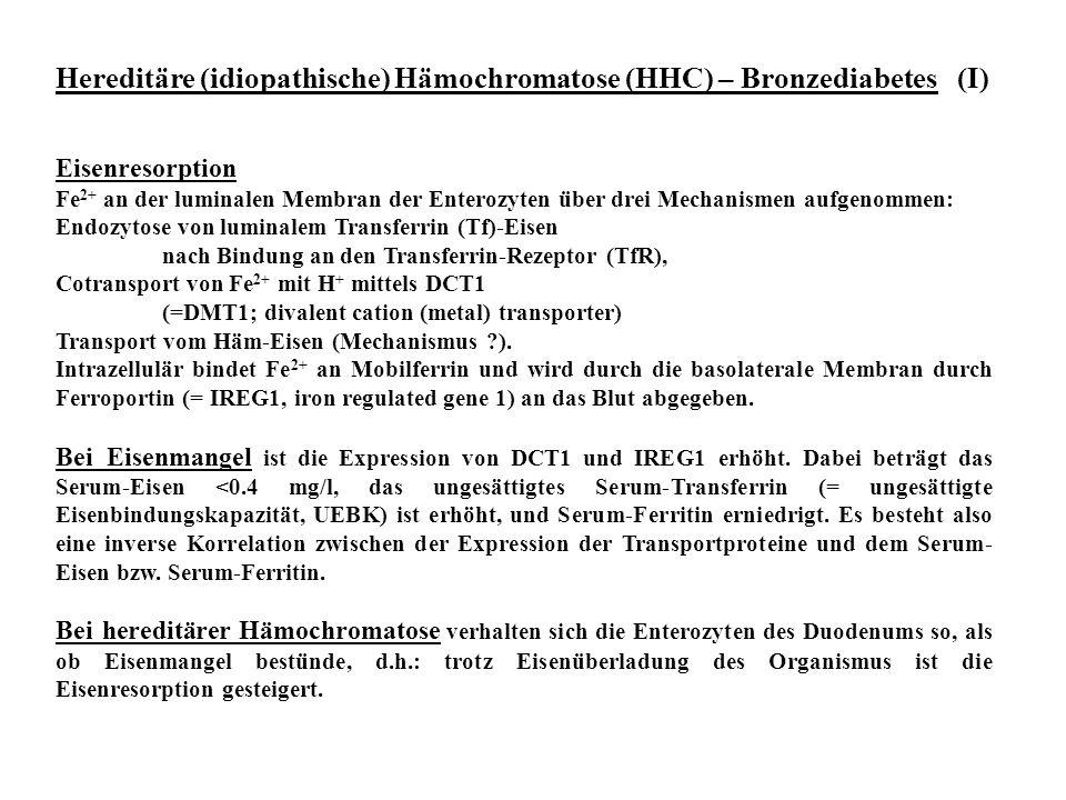 Hereditäre (idiopathische) Hämochromatose (HHC) – Bronzediabetes (I) Eisenresorption Fe 2+ an der luminalen Membran der Enterozyten über drei Mechanis