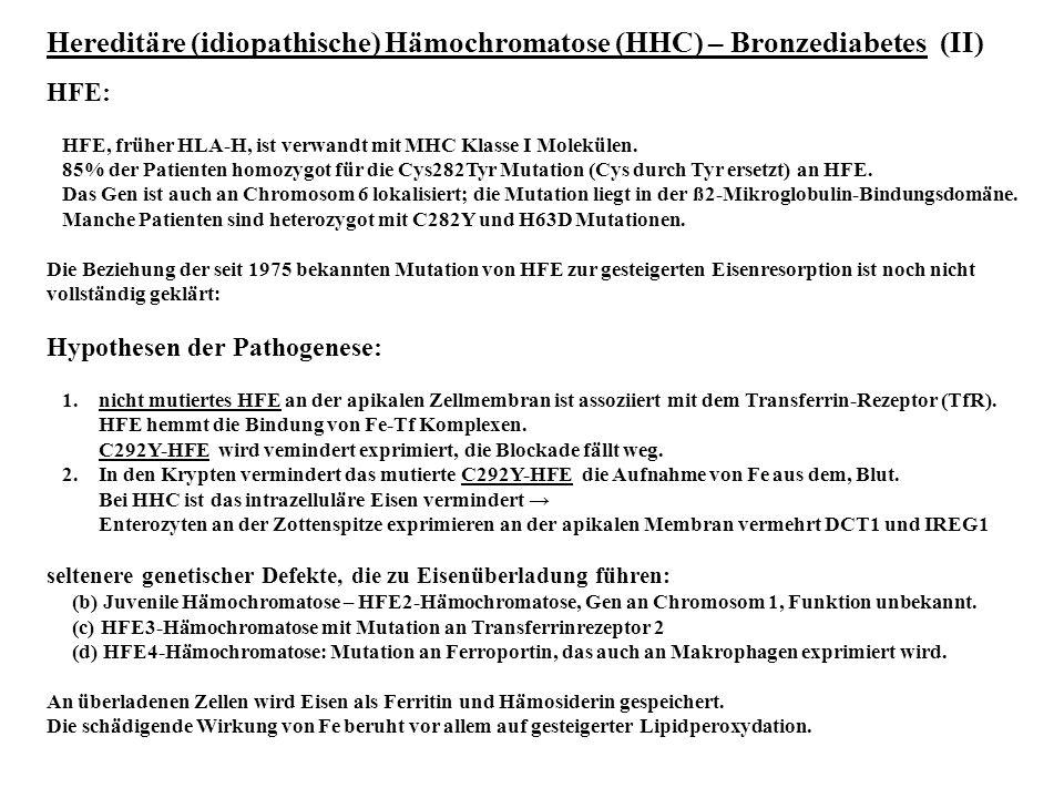 Hereditäre (idiopathische) Hämochromatose (HHC) – Bronzediabetes (II) HFE: HFE, früher HLA-H, ist verwandt mit MHC Klasse I Molekülen. 85% der Patient