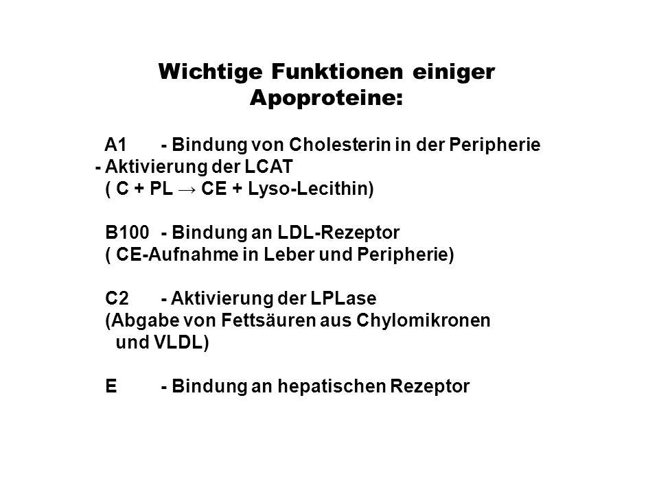 Wichtige Funktionen einiger Apoproteine: A1 - Bindung von Cholesterin in der Peripherie - Aktivierung der LCAT ( C + PL → CE + Lyso-Lecithin) B100- Bi