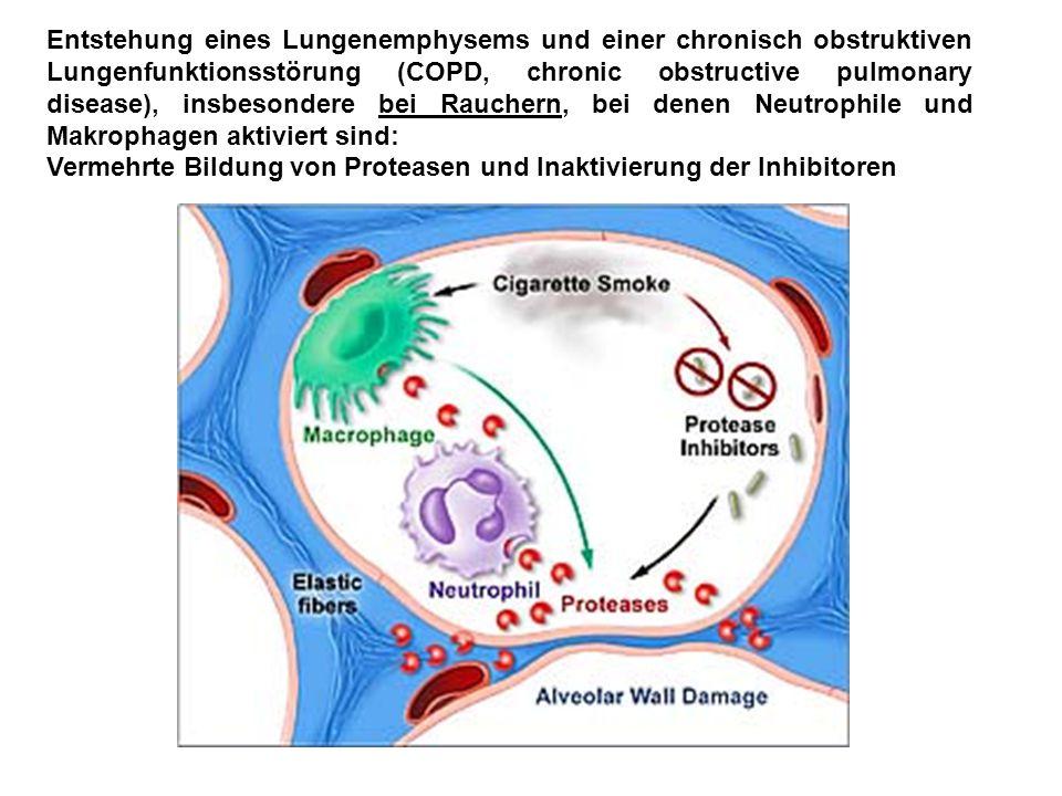 Entstehung eines Lungenemphysems und einer chronisch obstruktiven Lungenfunktionsstörung (COPD, chronic obstructive pulmonary disease), insbesondere b