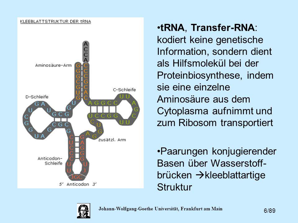 6/89 Johann-Wolfgang-Goethe Universität, Frankfurt am Main tRNA, Transfer-RNA: kodiert keine genetische Information, sondern dient als Hilfsmolekül be