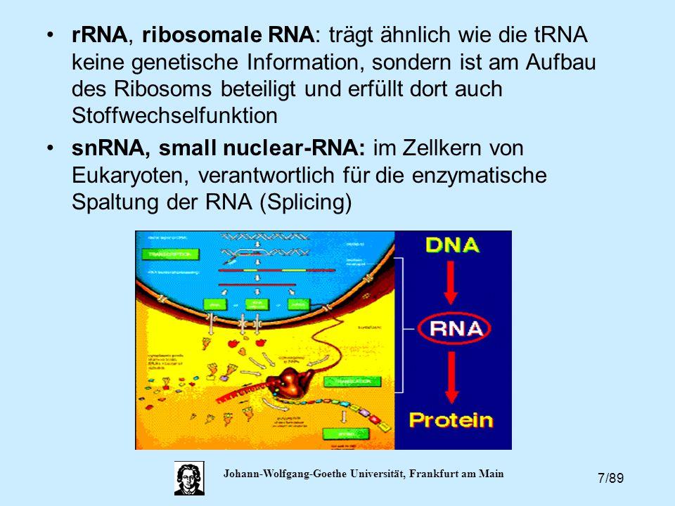 7/89 Johann-Wolfgang-Goethe Universität, Frankfurt am Main rRNA, ribosomale RNA: trägt ähnlich wie die tRNA keine genetische Information, sondern ist