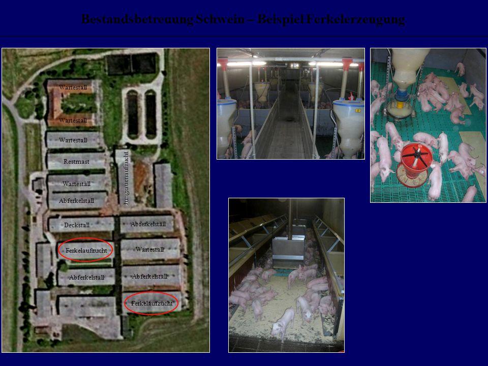 Bestandsbetreuung Schwein – Beispiel Ferkelerzeugung Wartestall Restmast Wartestall Abferkelstall Deckstall Abferkelstall Ferkelaufzucht Abferkelstall