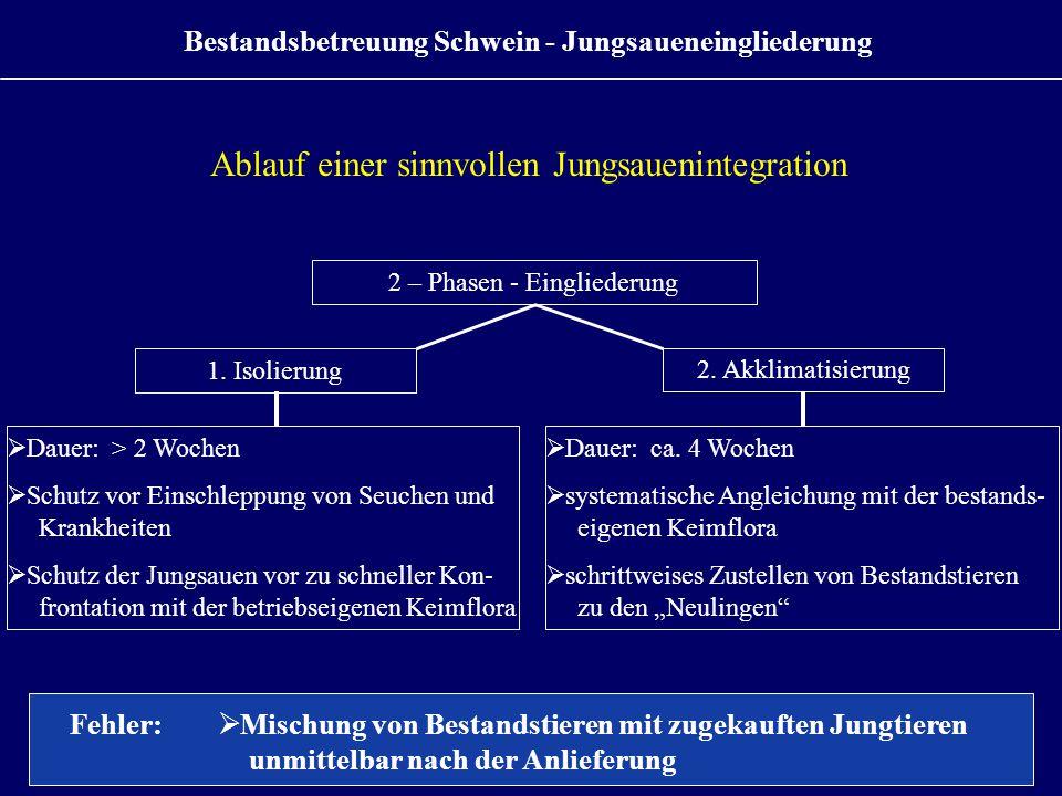 Ablauf einer sinnvollen Jungsauenintegration 2 – Phasen - Eingliederung 1. Isolierung  Dauer: > 2 Wochen  Schutz vor Einschleppung von Seuchen und K