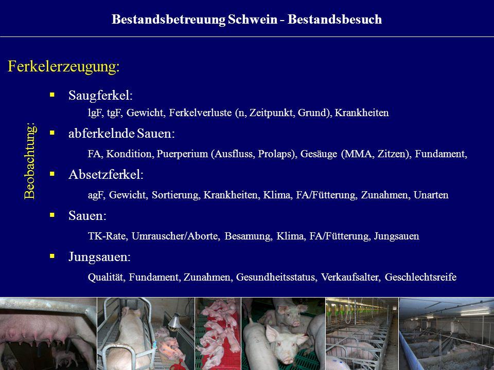 Ferkelerzeugung: Beobachtung:  Saugferkel: lgF, tgF, Gewicht, Ferkelverluste (n, Zeitpunkt, Grund), Krankheiten  abferkelnde Sauen: FA, Kondition, Puerperium (Ausfluss, Prolaps), Gesäuge (MMA, Zitzen), Fundament,  Absetzferkel: agF, Gewicht, Sortierung, Krankheiten, Klima, FA/Fütterung, Zunahmen, Unarten  Sauen: TK-Rate, Umrauscher/Aborte, Besamung, Klima, FA/Fütterung, Jungsauen  Jungsauen: Qualität, Fundament, Zunahmen, Gesundheitsstatus, Verkaufsalter, Geschlechtsreife Bestandsbetreuung Schwein - Bestandsbesuch