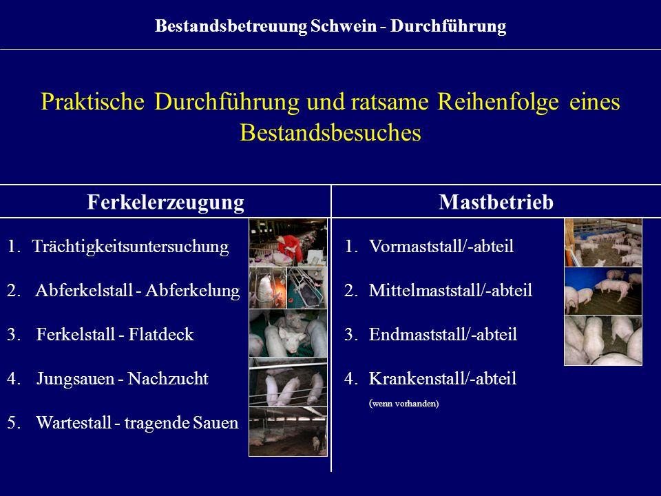 Praktische Durchführung und ratsame Reihenfolge eines Bestandsbesuches FerkelerzeugungMastbetrieb 1.Trächtigkeitsuntersuchung 2. Abferkelstall - Abfer