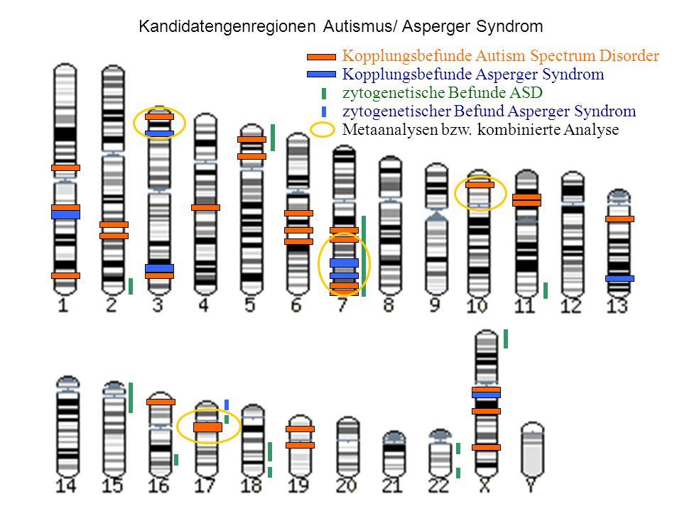 Kopplungsbefunde Autism Spectrum Disorder Kopplungsbefunde Asperger Syndrom zytogenetische Befunde ASD zytogenetischer Befund Asperger Syndrom Metaana