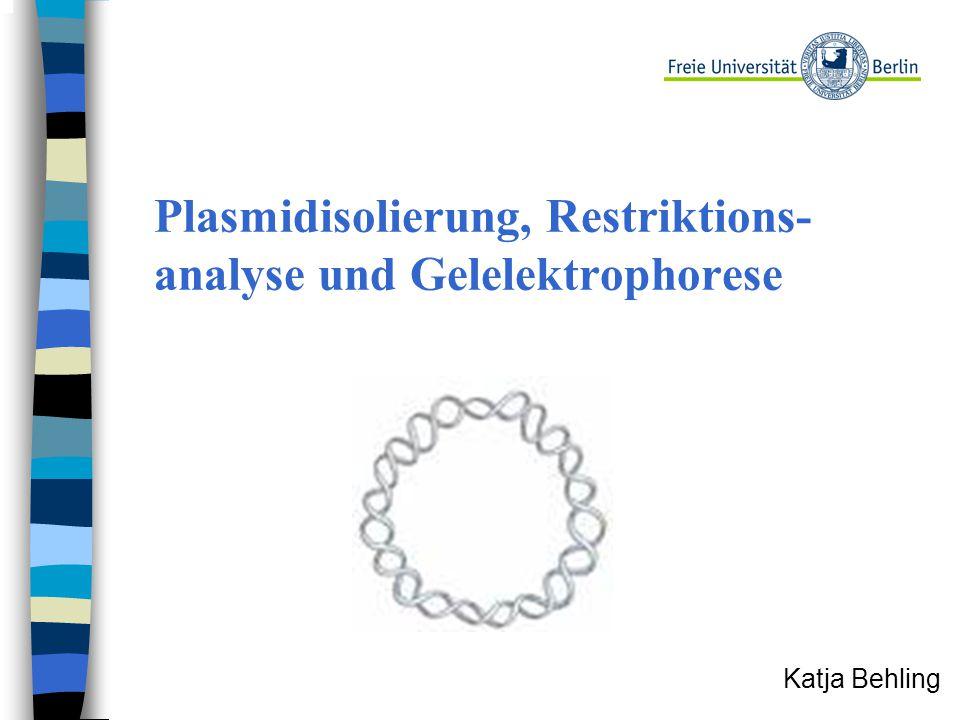 Plasmidisolierung, Restriktions- analyse und Gelelektrophorese Katja Behling