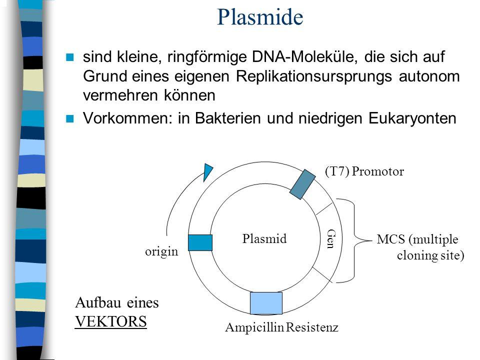Plasmide sind kleine, ringförmige DNA-Moleküle, die sich auf Grund eines eigenen Replikationsursprungs autonom vermehren können Vorkommen: in Bakterie