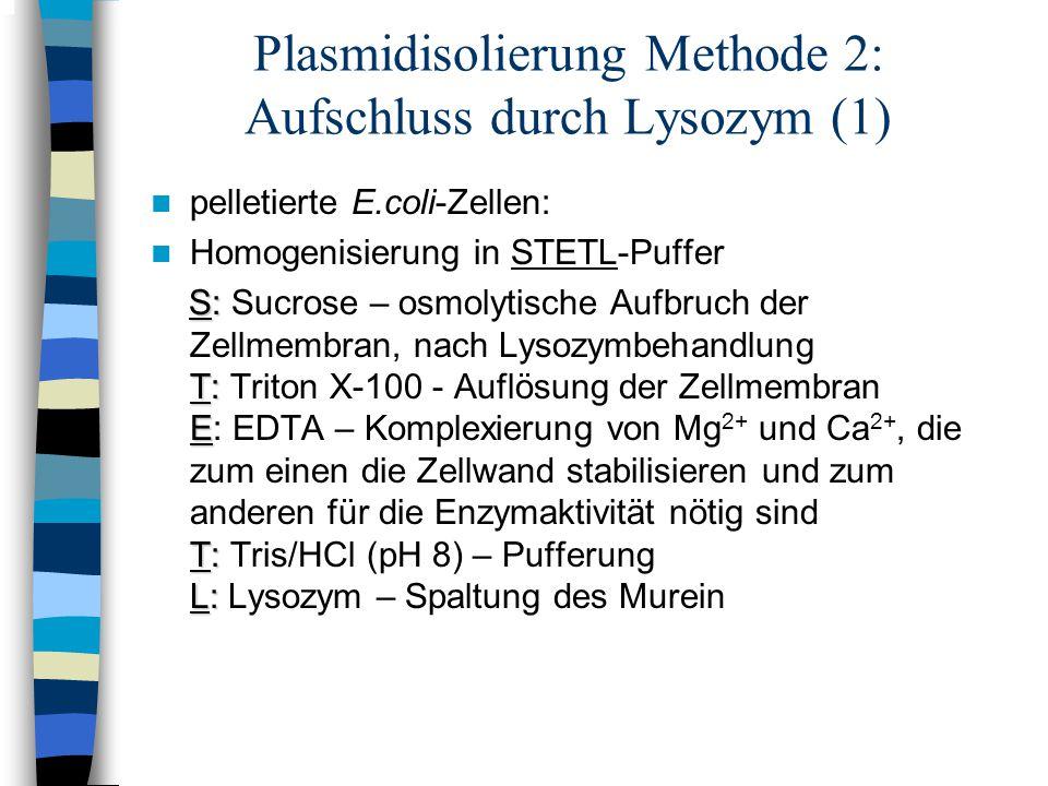 Plasmidisolierung Methode 2: Aufschluss durch Lysozym (1) pelletierte E.coli-Zellen: Homogenisierung in STETL-Puffer S: S: Sucrose – osmolytische Aufb