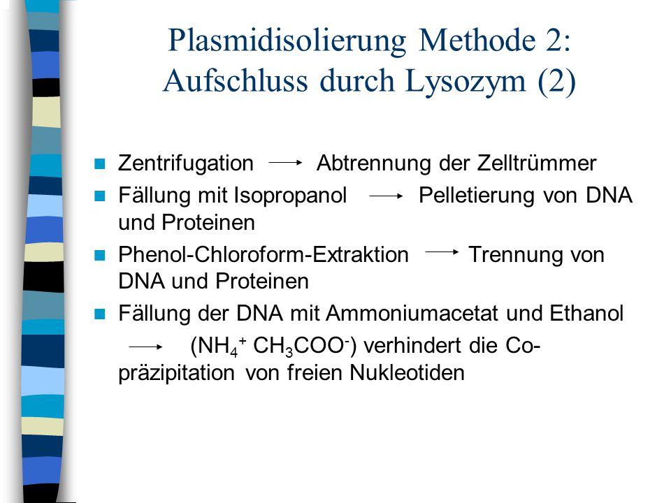 Plasmidisolierung Methode 2: Aufschluss durch Lysozym (2) Zentrifugation Abtrennung der Zelltrümmer Fällung mit Isopropanol Pelletierung von DNA und P
