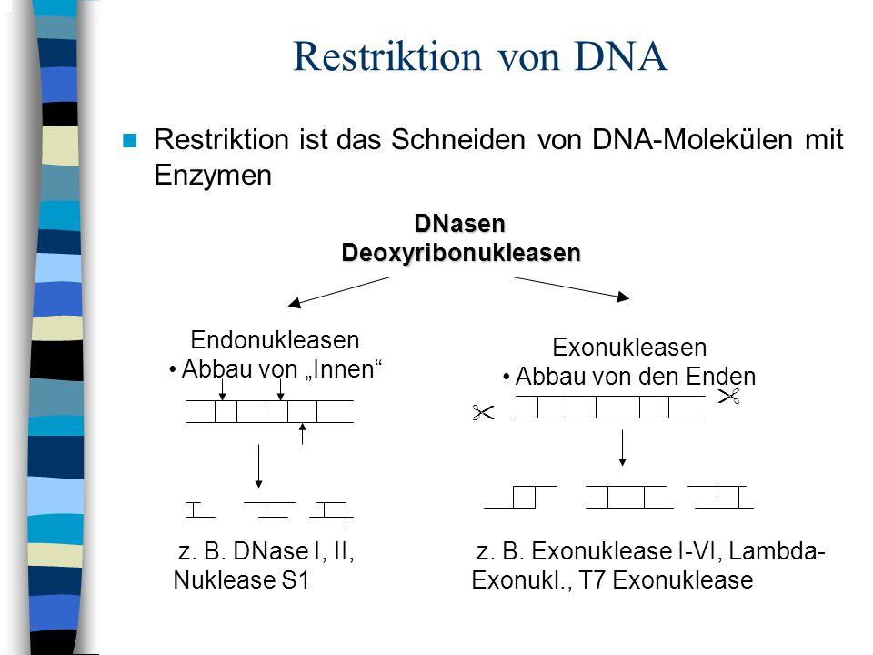 """Restriktion von DNA Restriktion ist das Schneiden von DNA-Molekülen mit Enzymen Endonukleasen Abbau von """"Innen""""  Exonukleasen Abbau von den Enden  z"""