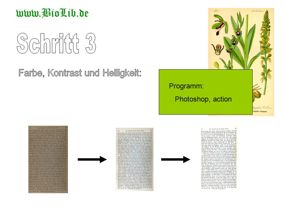 Programm: Photoshop, action