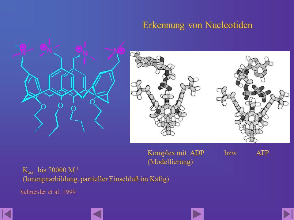 Erkennung von Nucleotiden Schneider et al. 1999 K ass bis 70000 M -1 (Ionenpaarbildung, partieller Einschluß im Käfig) Komplex mit ADP bzw. ATP (Model