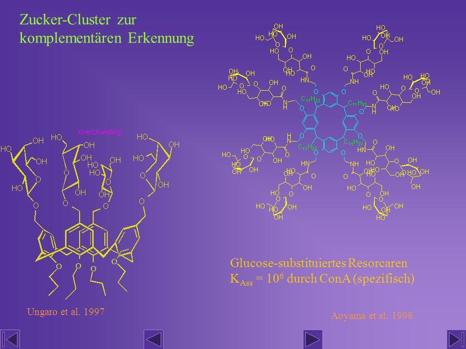 Zucker-Cluster zur komplementären Erkennung Glucose-substituiertes Resorcaren K Ass = 10 6 durch ConA (spezifisch) Ungaro et al. 1997 Aoyama et al. 19
