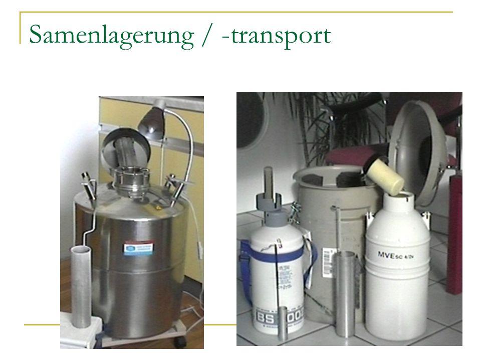 Samenlagerung / -transport