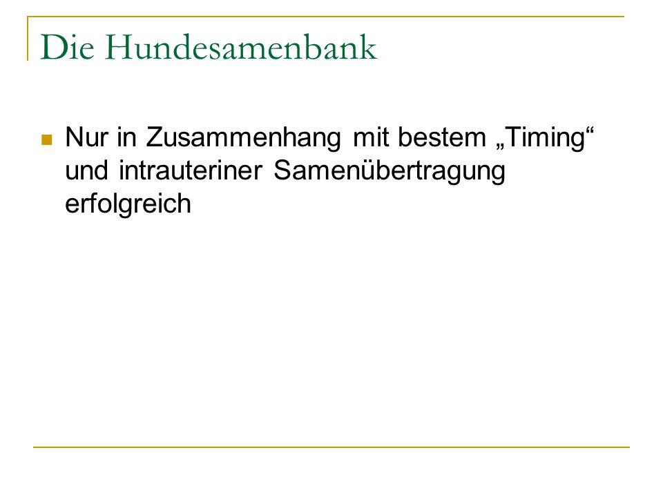 """Die Hundesamenbank Nur in Zusammenhang mit bestem """"Timing und intrauteriner Samenübertragung erfolgreich"""